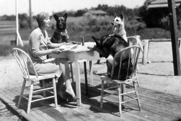 1930 with German Shepherds